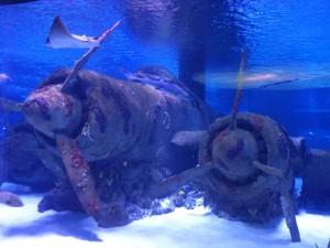 морской аквариум в Анталии